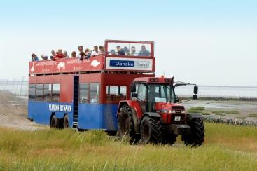 Zuid-Denemarken, Mandø Bus