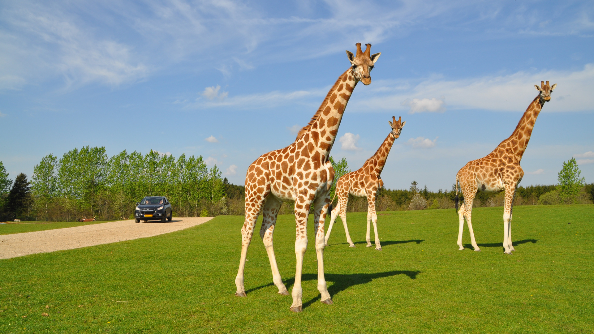 Givskud Zoo Safaripark