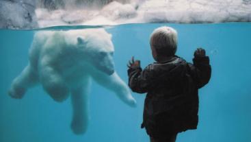 Aalborg Zoo in Noord-Jutland