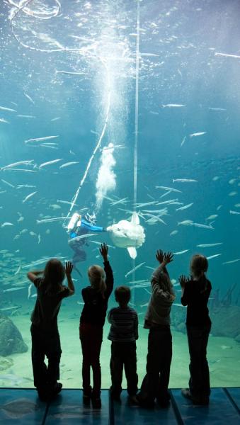 Nordsøen Oceanarium in Noord-Jutland, Denemarken
