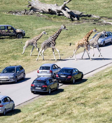 Knuthenborg Safaripark Denemarken. Foto: Knuthenborg Safaripark