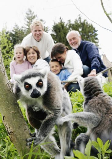 Knuthenborg Safaripark op de Oost-Deense eilanden in Denemarken. Foto: Niclas Jessen