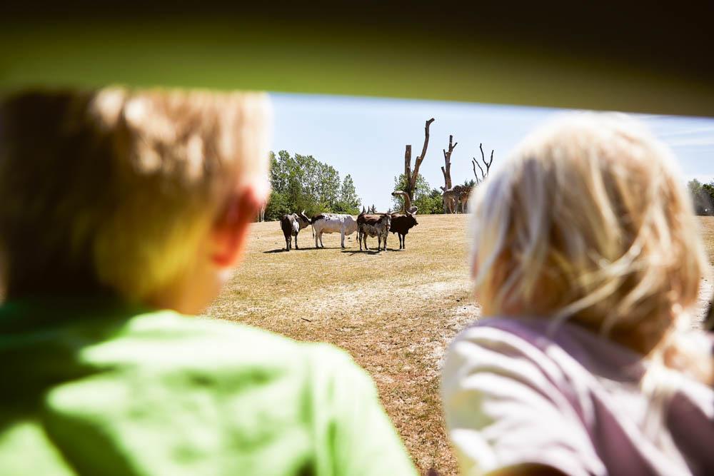 Givskud Zoo in Zuid-Denemarken. Foto: Givskud Zoo
